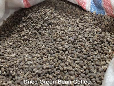 3-Dried Green Bean Coffee_resize