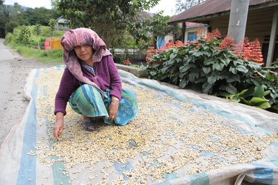 5a woman drying parchment_resize