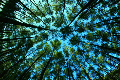 mangrove-trees_resize