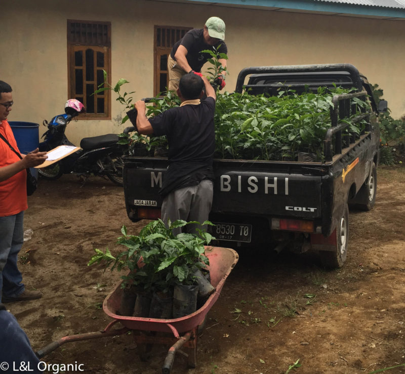 Developing Nurseries for Variety Diversity to Farmers