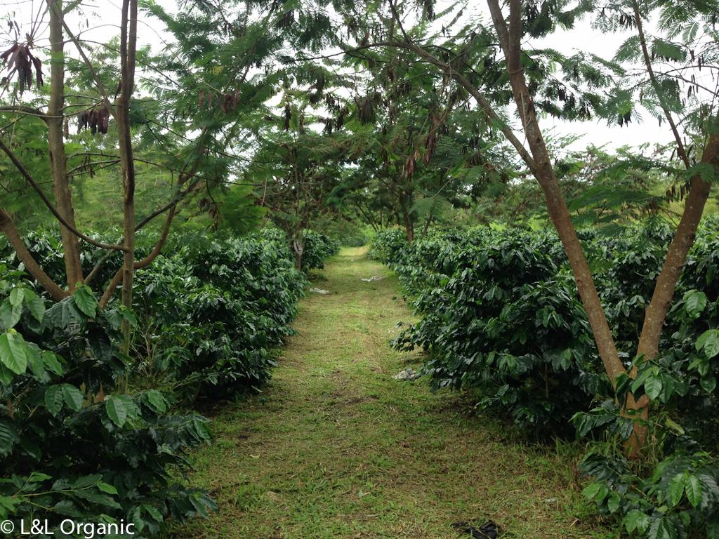 Mariah Dolok Farm